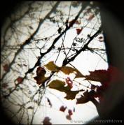 down the grapevine